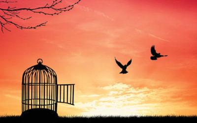 Freedom, Discipline & Security